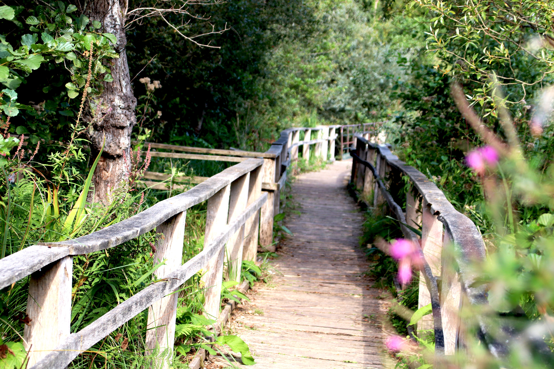 A l'occasion des Journées du Patrimoine, on vous propose des balades pédestres au Parc d'Isle sur réservation auprès de la Maison du Parc (places limitées) !#journeesdupatrimoine #ParcdIsle #AggloSaintQuentinoisagglo-saintquentinois.fr/actualites-109…